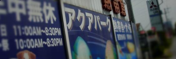 春日部 ペットショップ 熱帯魚 埼玉 ビーシュリンプ オスカー 古代魚 ダトニオ