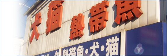 熱帯魚 通販 埼玉